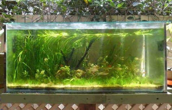 aquarium gardens for fishes