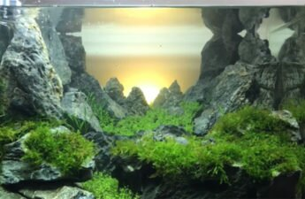 aquarium gardeners an d beautiful mountains