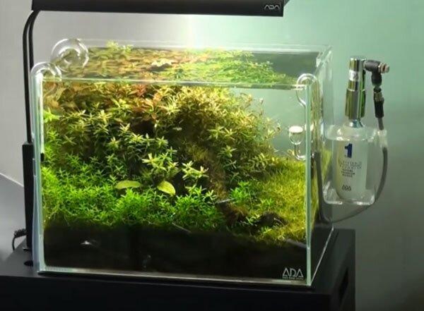 Takashi Amano's Gallery  aquarium gardens