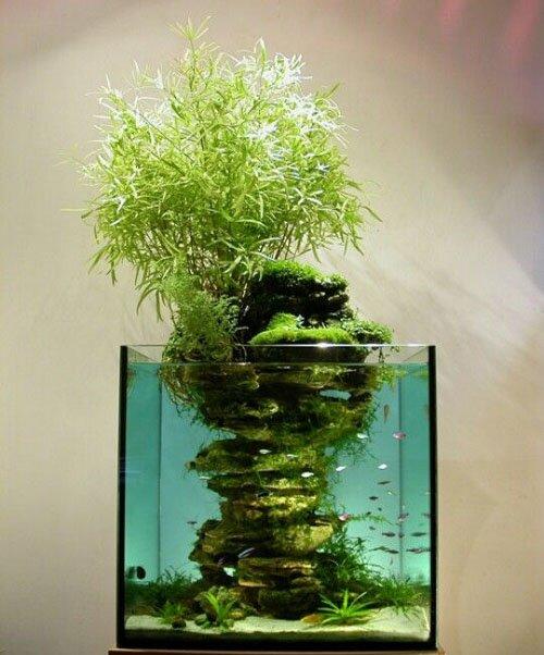 aquarium gardens for fishes 9