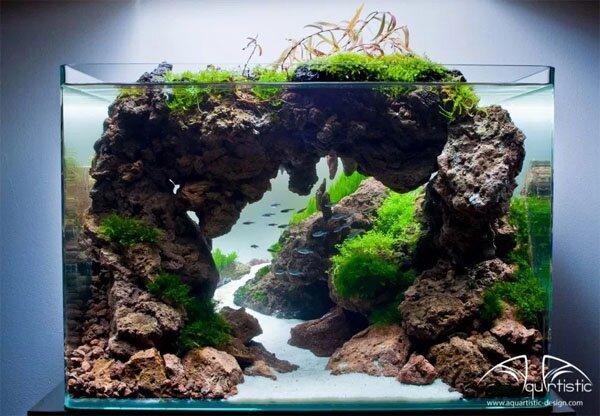aquarium gardens for fishes 7