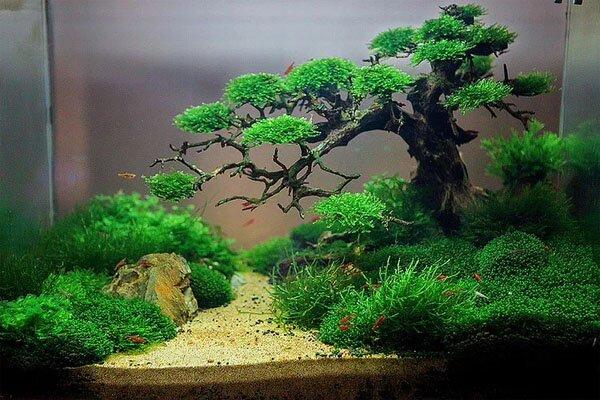 aquarium gardens for fishes 6