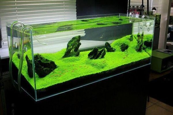 ... Takashi Amanou0027s Gallery Aquarium Gardens