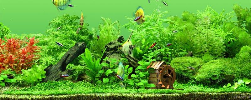 aquarium gardens for fishes 4
