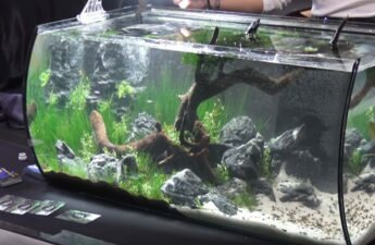 realistic forest in tank
