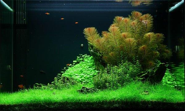 aquarium gardens for fishes 2
